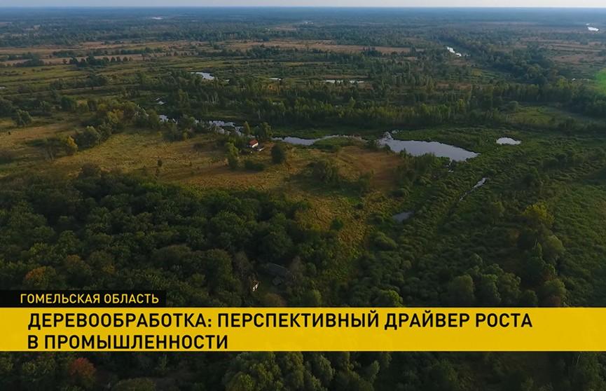 Процесс возрождения чернобыльских земель запускают в Беларуси