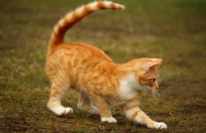 Кот прокусывает тапки хозяина, будто дырокол! Только посмотрите на это! (ВИДЕО)