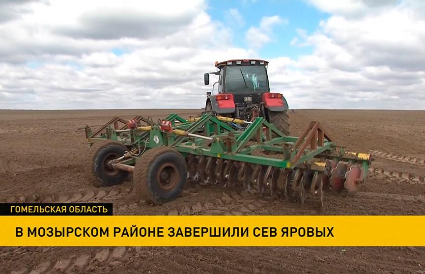 Первые рекорды: появился лидер в посевной кампании Беларуси