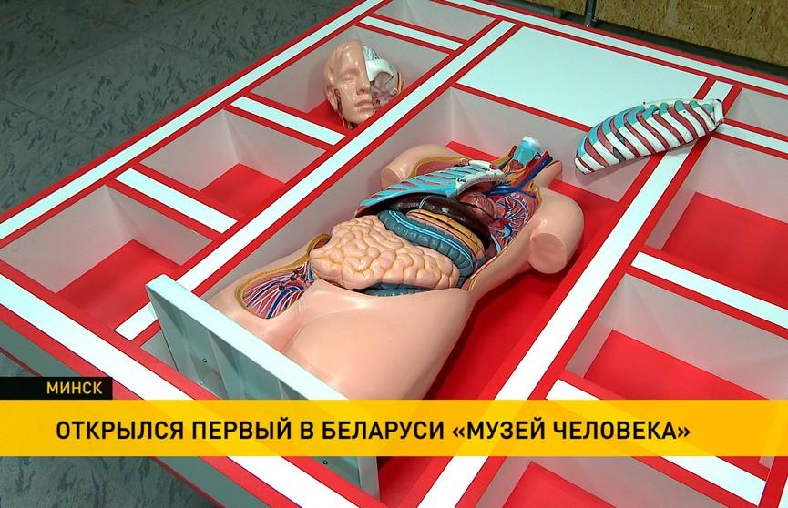 Первый в Беларуси «Музей человека» открылся в Минске: о том, как устроен наш организм