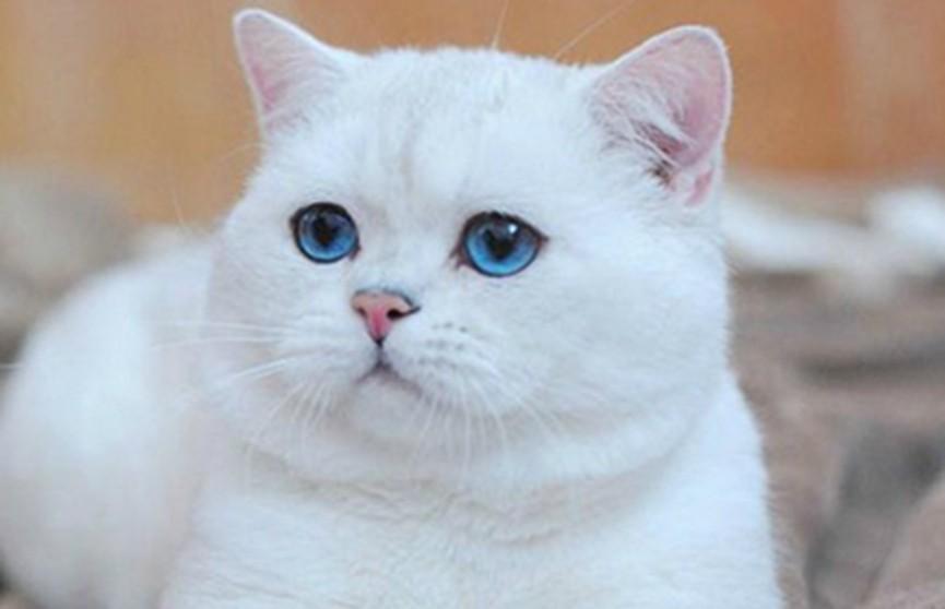 Кот спас жизнь своей больной хозяйке в Великобритании