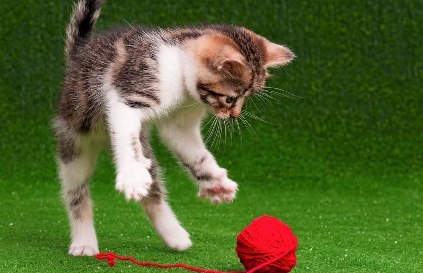 Кот увидел на полу пакет и вдруг начал быстро бегать и издавать смешные звуки. Посмотрите  – так в чем же магия целлофана? (ВИДЕО)