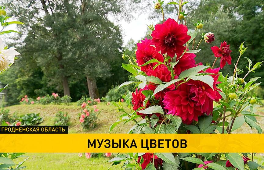 В музее-усадьбе Огинского восстанавливают ландшафт парка: в Залесье открылся фестиваль цветов