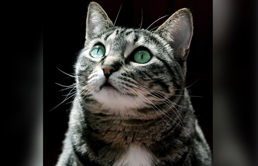 Девушка отчитала кошку за плохое поведение, и пушистой точно стало стыдно. Посмотрите – 100% улыбнетесь! (ВИДЕО)