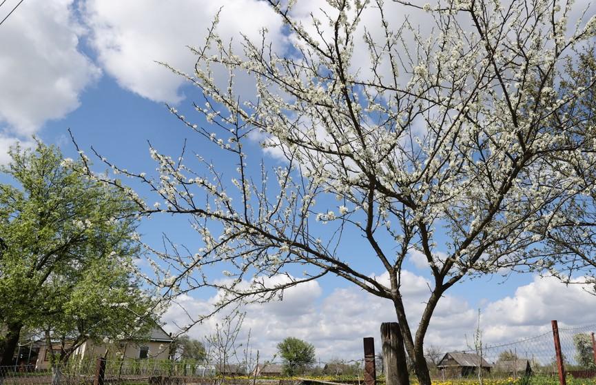 Холод заканчивается и наступает потепление: прогноз погоды на 8 и 9 мая