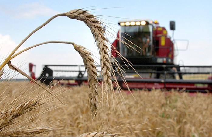 Около 3,5 млн тонн зерна собрано с полей