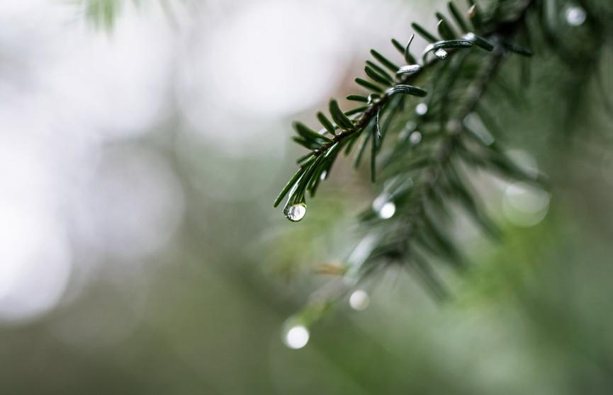 Дожди и ветер, но в понедельник потеплеет: прогноз погоды на выходные 25 и 26 сентября
