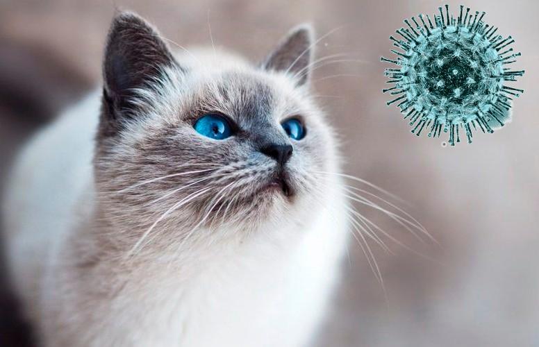Назван способ, как не заразить домашних животных коронавирусом