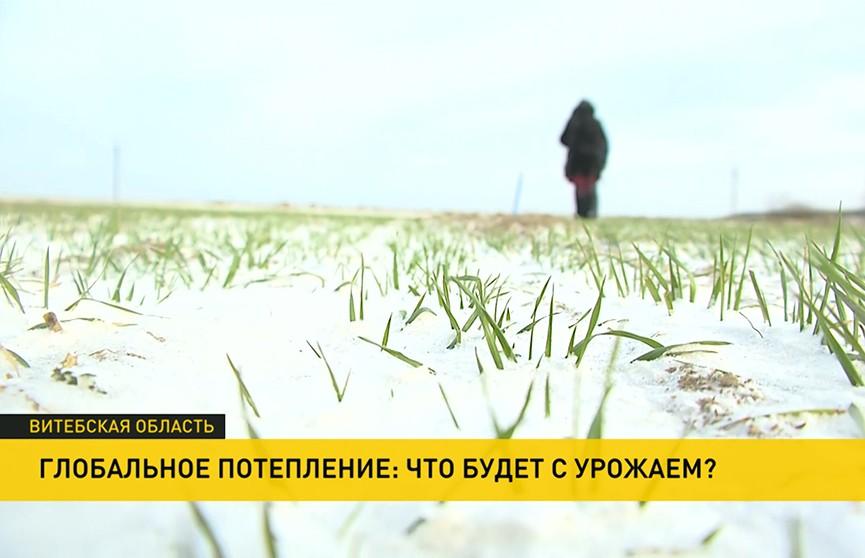 Зима не перестает удивлять температурными рекордами. Какой будет урожай?