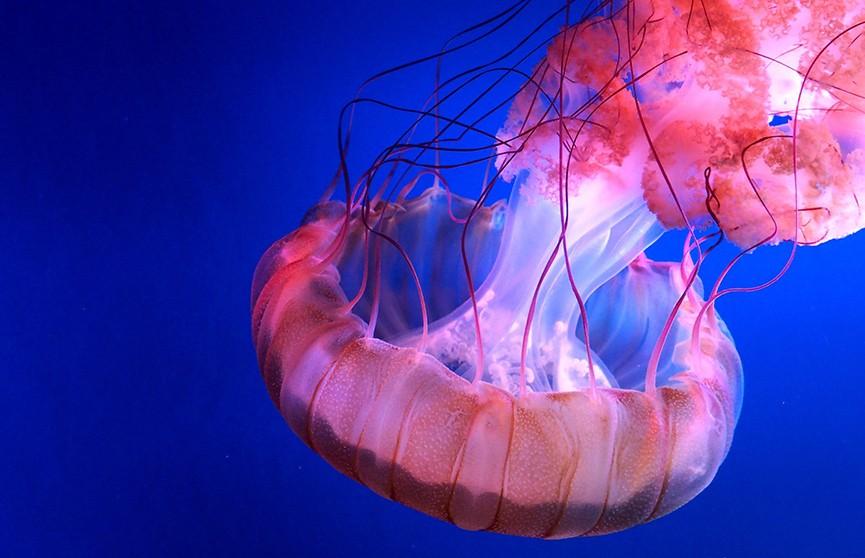 На Канарских островах туристам запретили посещать пляжи из-за медуз