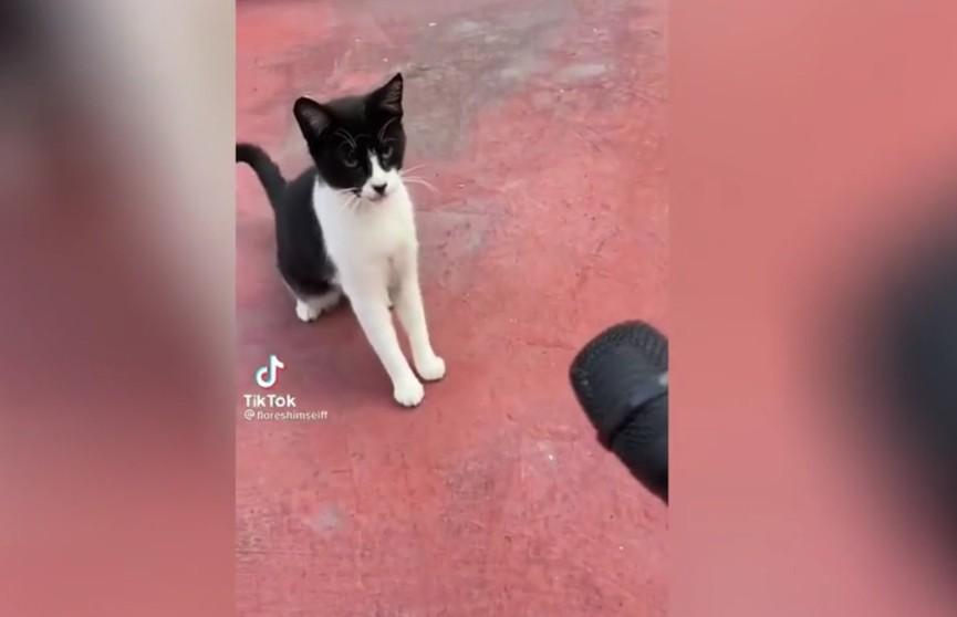 «Без комментариев»: интервью журналиста с дерзким котом рассмешило всех до слез