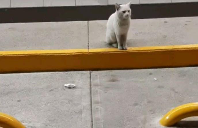 Бездомный кот заманил женщину в магазин, показал желаемый корм и нашел новую семью