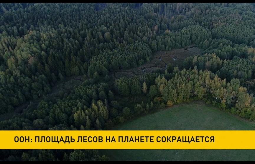 ООН выразила озабоченность сокращением площади лесов на планете – за последние 30 лет она сократилась на 178 млн гектаров.
