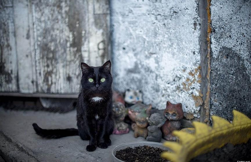 Пропавшую год назад кошку нашли в заброшенном кинотеатре