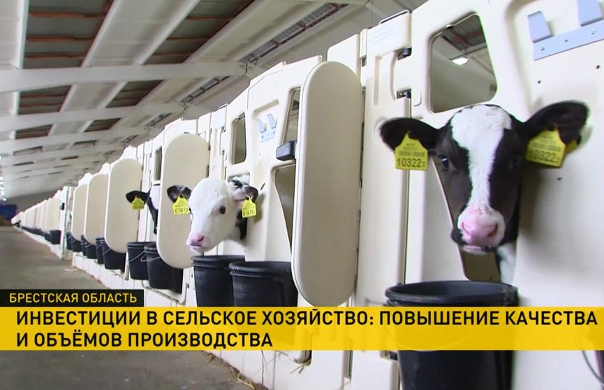 Инвестиции в сельское хозяйство: повышение качества и объёмов производства