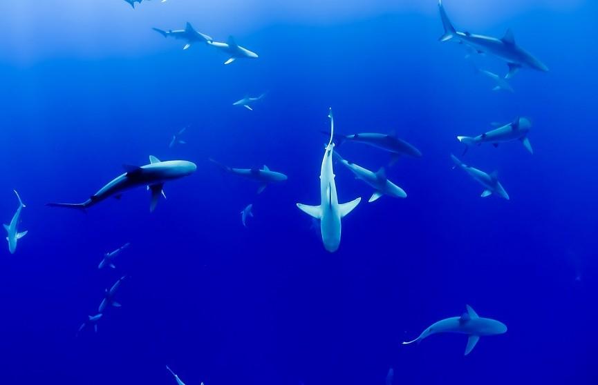 Британский пловец не испугался 50 акул и наслаждался «общением» с ними