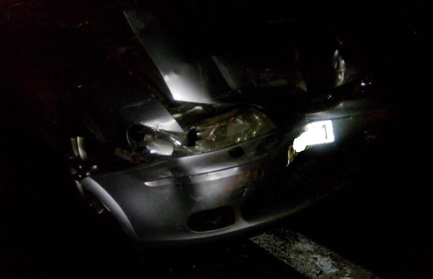 Лось стал причиной ДТП с четырьмя авто