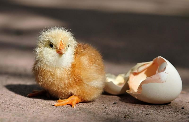 «Как цыплёнок ощипанный»: Волочкова сменила причёску