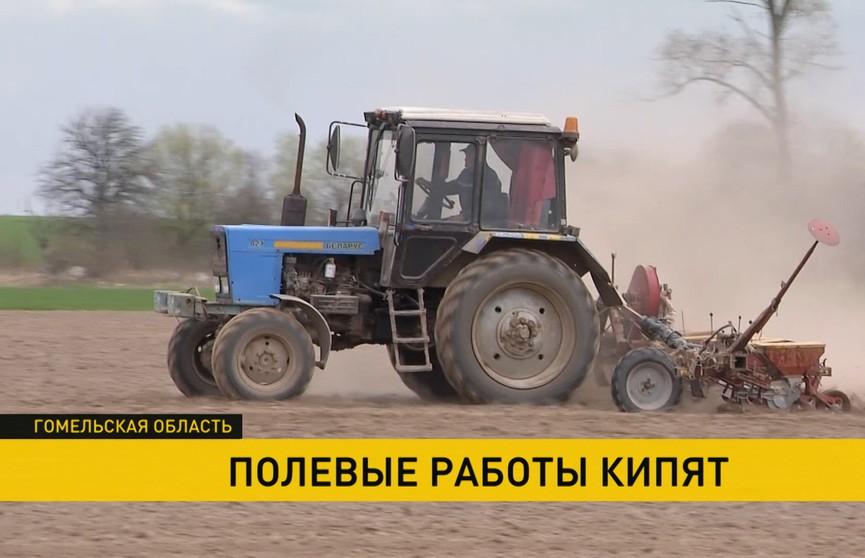 Сев кукурузы начался в Гомельской области: всё больше ранее загрязнённых чернобыльских земель возвращают в сельхозоборот