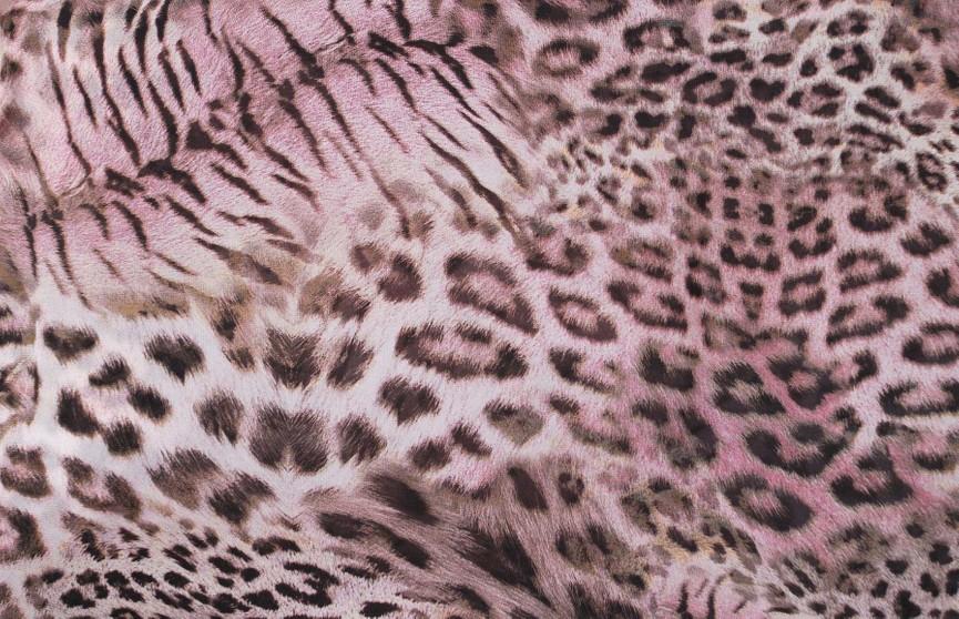 На скрытую камеру попал редчайший розовый леопард