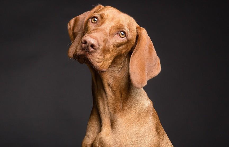 Собака долго не видела хозяина. Посмотрите на ее реакцию после встречи с ним! Пользователи Сети были растроганы (ВИДЕО)