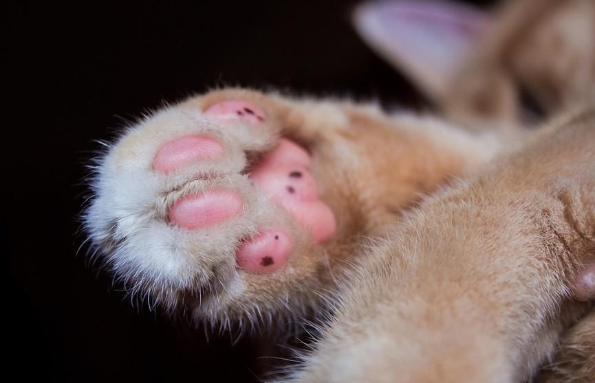 И пусть весь мир подождет? Кот ненавязчиво напомнил о себе работающему хозяину и умилил соцсети (ВИДЕО)