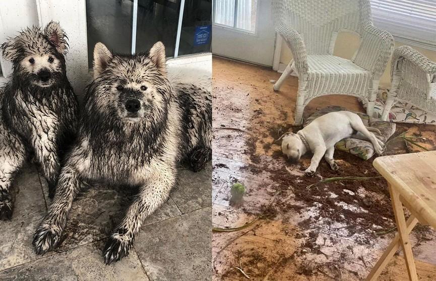 «Один наш пес использует другого как лошадь»: фотографии собак, которые заставят вас рассмеяться в голос