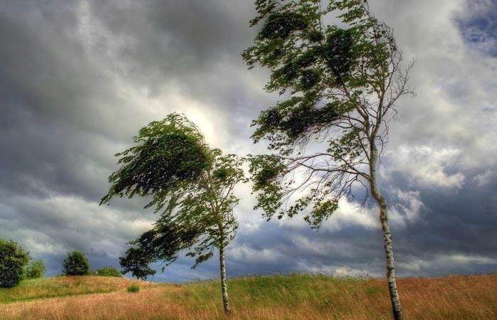 29 июня будет порывистый ветер и до +25°С
