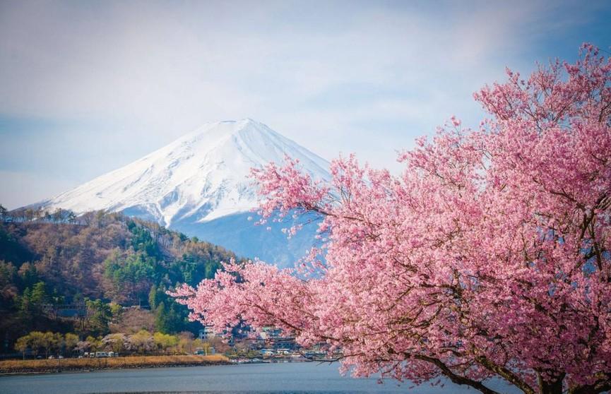 В Японии на 12 дней раньше обычного открыли сезон цветения сакуры. Подборка восхитительных фото