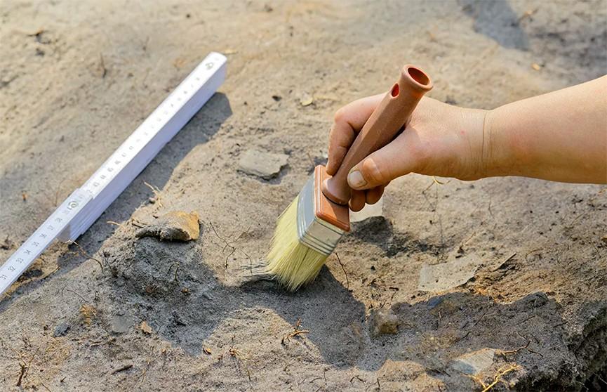 Ученные нашли в Аргентине новый древний вид рептилий