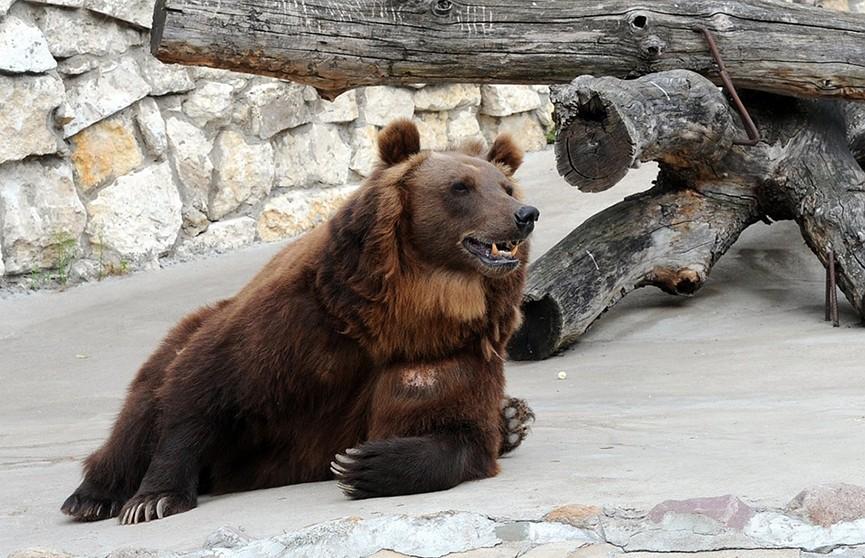 Медведь из Китая станцевал диско и стал звездой соцсетей (Видео)