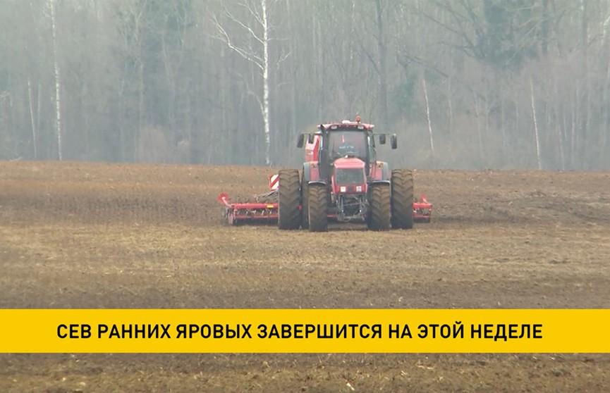 Сев ранних яровых завершится на этой неделе в Беларуси