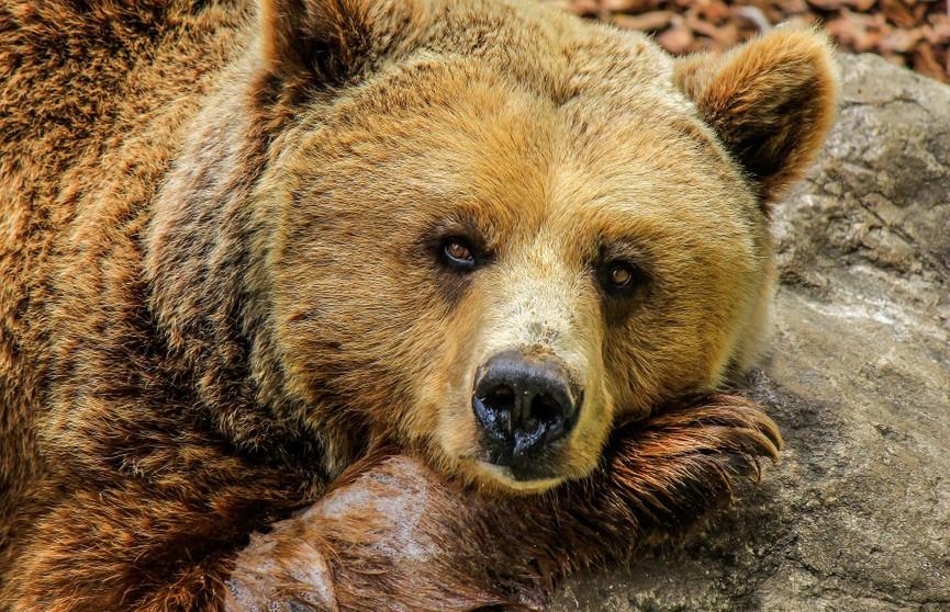 В Минском зоопарке проснулись медведи