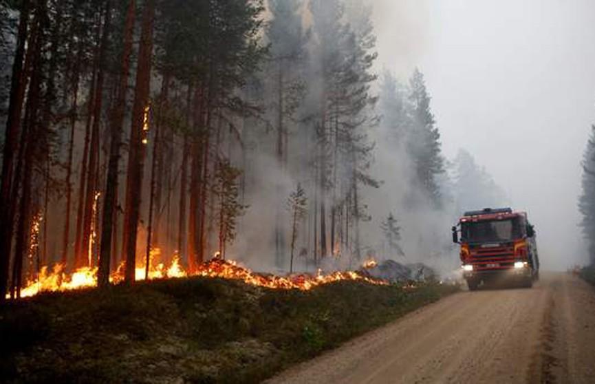 Аномальная жара в Швеции спровоцировала серьёзные лесные пожары