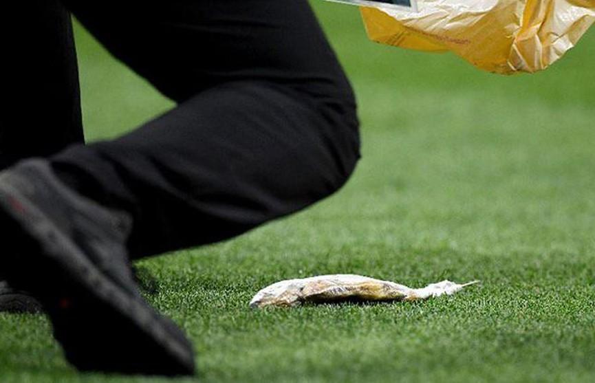 Английские болельщики бросили на поле мёртвую рыбу во время игры своей сборной с хорватами