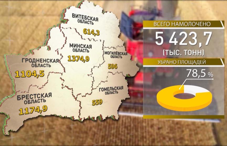 Уборочная-2019: аграрии собрали почти 5,5 млн тонн зерна