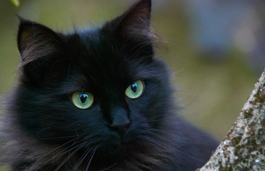 Кот разрешил хозяину его подстричь, но посмотрите на его выражение «лица»! Это обязательно нужно увидеть – будете смеяться! (ВИДЕО)