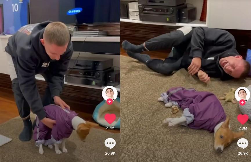 «Сломал собаку»: блогер показал, что происходит с его псом, когда на него надевают костюм (ВИДЕО)