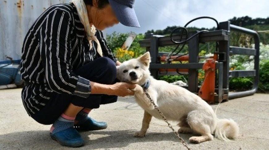 Пес спас жизнь своей хозяйке, два дня согревав ее на поле