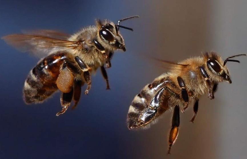 Десятки тысяч пчел атаковали улицу в Калифорнии