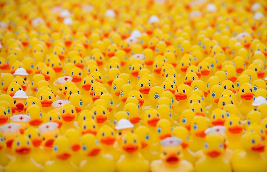 Более 60 тысяч резиновых уточек плавали по реке в США