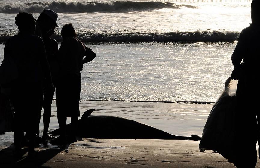СМИ: около 50 черных дельфинов выбросились на берег в Новой Зеландии