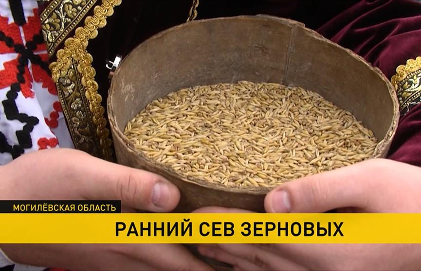 На Могилёвщине провели традиционный обряд «Засевки» – залог хорошего урожая