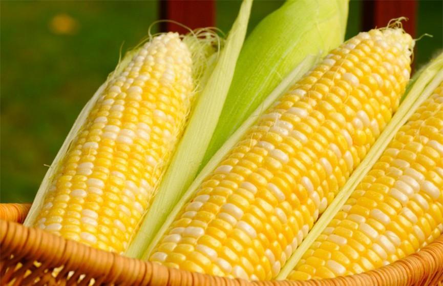Экологичные пакеты из кукурузы скоро появятся в белорусских гипермаркетах