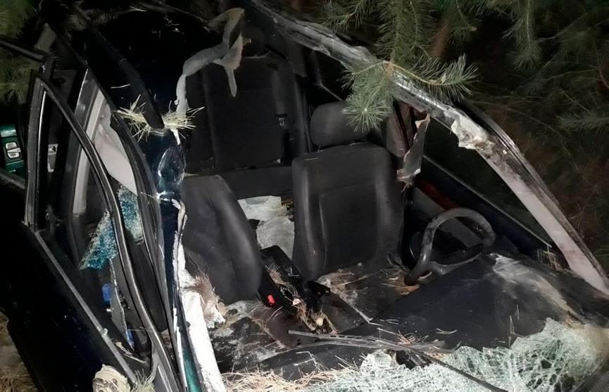 ДТП с лосем произошло под Барановичами: пострадали 2 человека