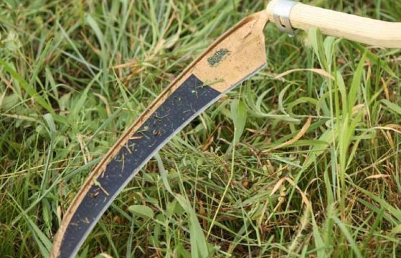 Смерть с косой в Молодечненском районе: на мужчину напал знакомый с сельскохозяйственным инструментом
