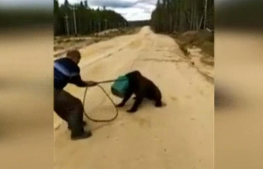 Медведя, застрявшего в канистре, пытаются спасти в Якутии