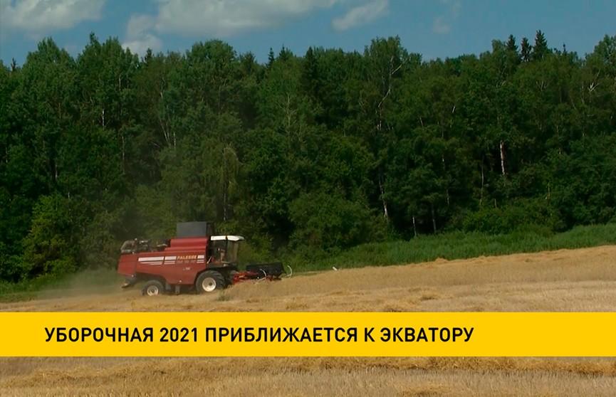 Уборочная-2021: намолочено более 2,2 млн тонн зерна