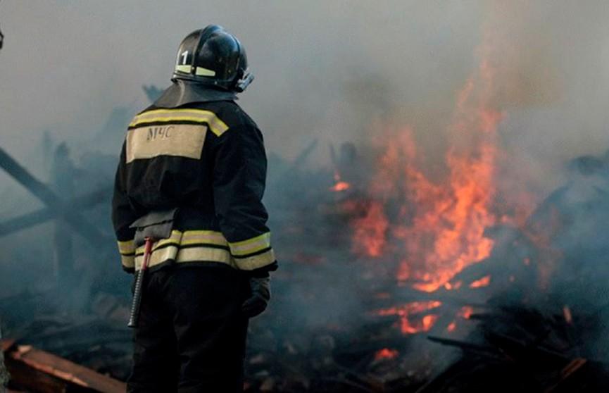 70 телят было спасено на пожаре в Каменецком районе