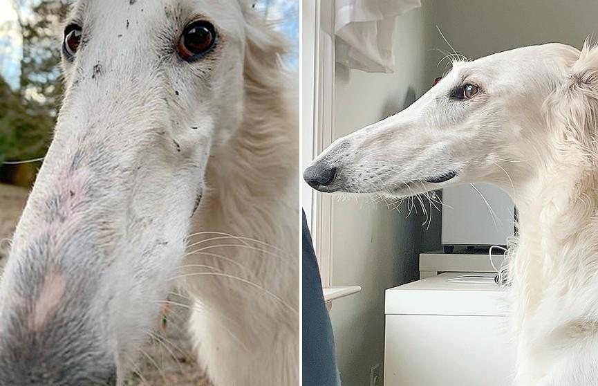 Собака с аномально длинным носом стала звездой Сети